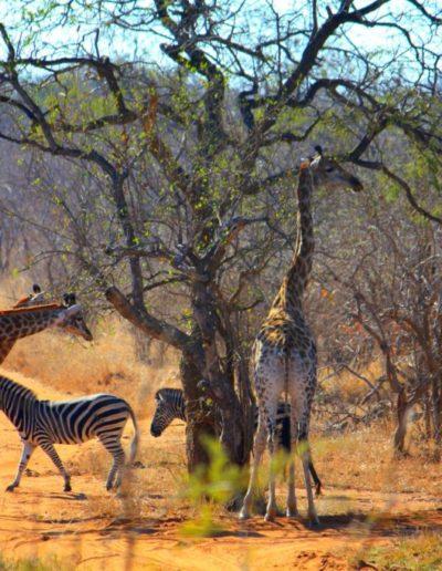 sudafrica_4ah78.T0